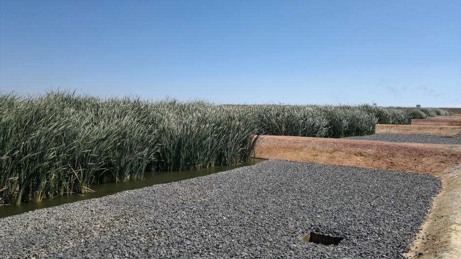 Constructed wetland for warmer climates