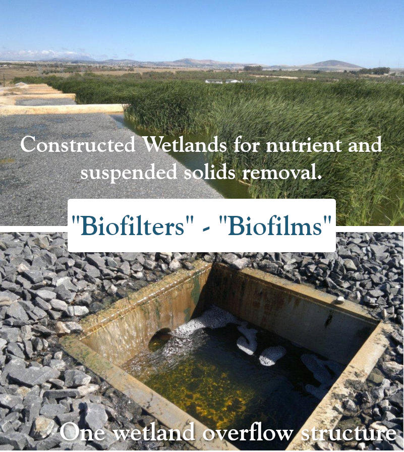 Constructed wetlands and wetland overflow structures also known as biofilms and biofilters. Water treatment company, Dekker Biotech, South Africa.