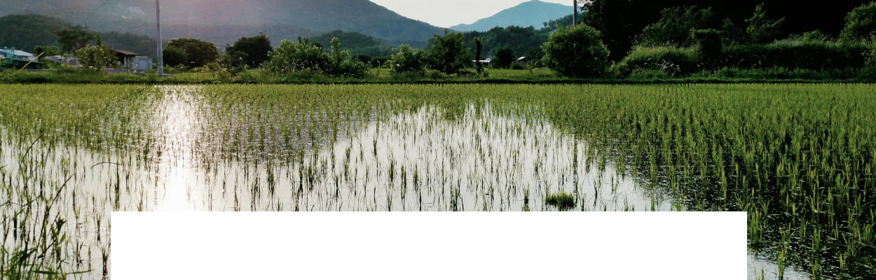 Constructed wetlands fors sewage wastewater bioremediation project at a resort community. Dekker Biotech, South Africa.
