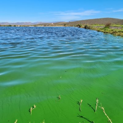 At closer look the Green Algae can be clearly observed.