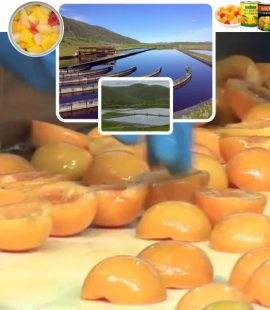 Treating fruit processing wastewater for a Fruit Canning client, Langeberg & Ashton Foods. Dekker Biotech, South Africa