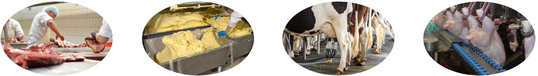 Food processing industries needing sludge treatment of floating fat wastewater layers. Dekker Biotech, South Africa